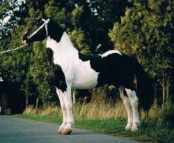 natuurlijke dekking paard